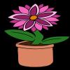Pink Starflower