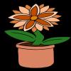 Orange Starflower