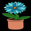 Blue Starflower